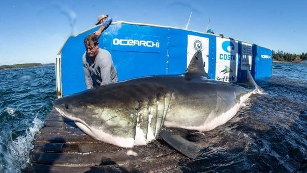 R. Snow/Ocearch/The Canadian Press