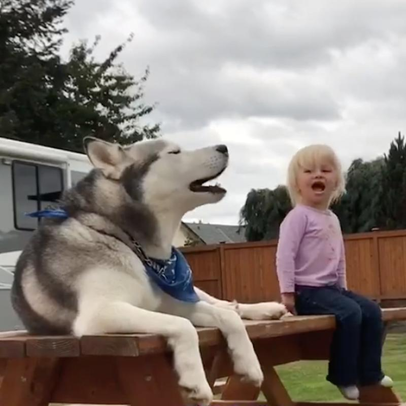 """Watch as a Little Girl and Her Husky Dog Have a """"Conversation"""" With Each Other"""