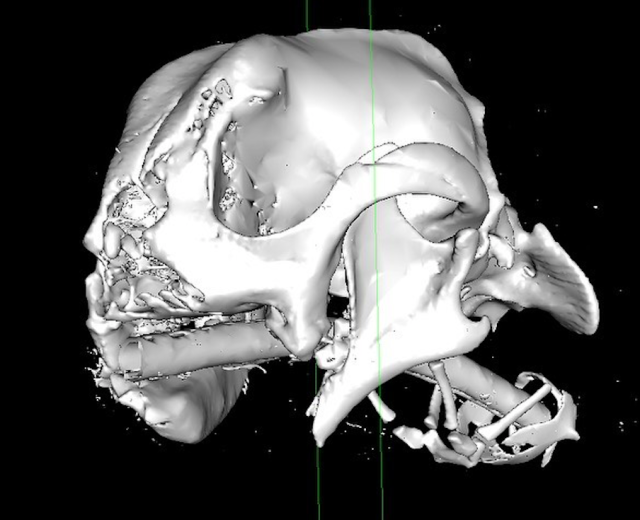 Millie's skull showed the extent of her injuries (Caters)
