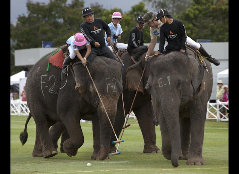 Elephant polo players from the Spice girls team (left) and the British Airways British Army team battle it out for 5th place during the final day at the King's Cup Elephant polo tournament Sept. 11, 2011, in Hua Hin, Thailand.This year marked the 10th edition of the polo tournament with 12 international teams participating for the unusual annual charity sports event.