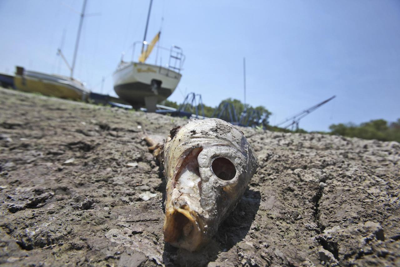 A dead fish lays near sailboats left high and dry at Benbrook Lake in Benbrook, Texas, Tuesday, Aug. 16, 2011. As the summer months and heat wears on, extreme drought conditions continue throughout the state with little chance of rain in the coming days to offer relief for this reservoir south of Fort Worth. (AP Photo/LM Otero)