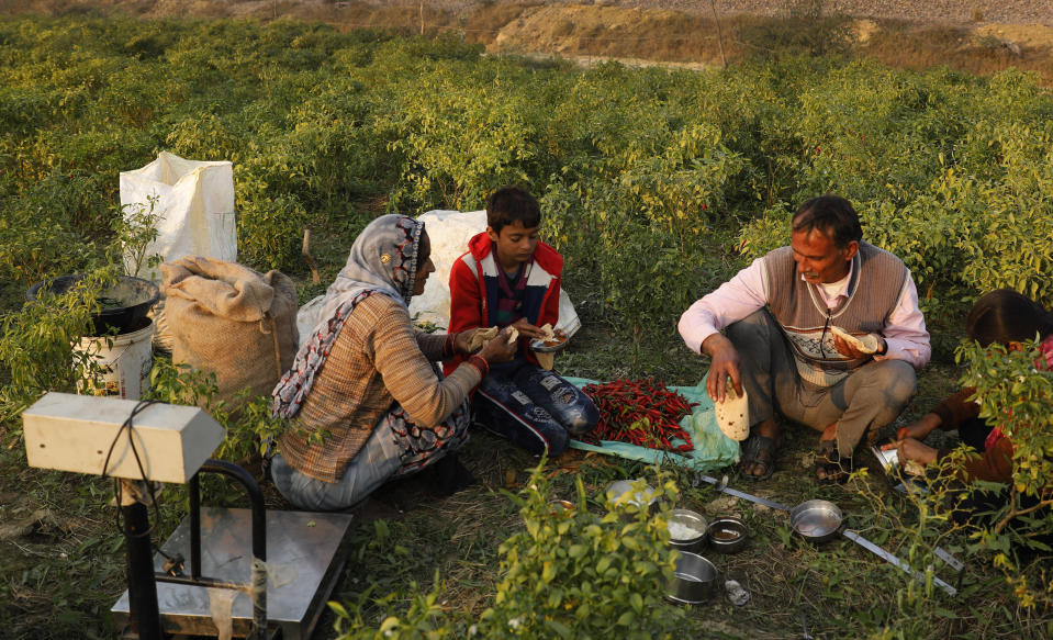 Indian farmer Ram Singh Patel, right, eats lunch with his family members in their field in Fatehpur district, 180 kilometers (112 miles) south of Lucknow, India, Saturday, Dec. 19, 2020. Patel's day starts at 6 in the morning, when he walks into his farmland tucked next to a railway line. For hours he toils on the farm, where he grows chili peppers, onions, garlic, tomatoes and papayas. Sometimes his wife, two sons and two daughters join him to lend a helping hand or have lunch with him. (AP Photo/Rajesh Kumar Singh)