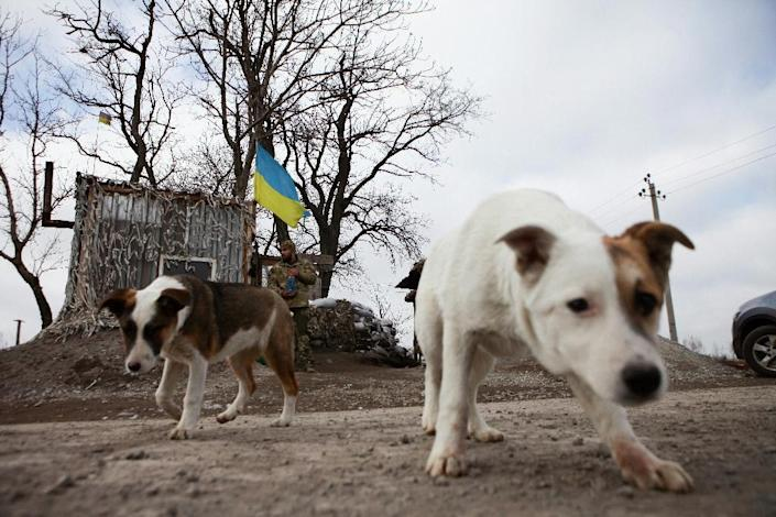 Dogs have turned into a prized companion for fighters on both sides of eastern Ukraine's separatist war (AFP Photo/Aleksey Filippov)