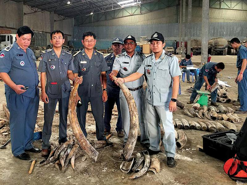Cambodian authorities display pieces of smuggled ivory