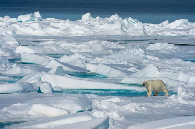 <p>A polar bear walks on the pack ice north of Svalbard, Norway, July 20, 2015. (Wolfgang Kaehler/LightRocket via Getty Images) </p>