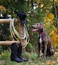 """<p>Named after the Lacy brothers who bred this dog in the 1800s in Texas, the <a href=""""http://www.nationalkennelclub.com/breed-standards/blue-lacy.htm"""" rel=""""nofollow noopener"""" target=""""_blank"""" data-ylk=""""slk:Blue Lacy"""" class=""""link rapid-noclick-resp"""">Blue Lacy</a> will either have a bluish gray coat or sometimes a red or tri-colored one. The Lacy was first recognized in 2001 by the Texas Senate; in Senate Resolution No. 436, the 77th Legislature honored the Lacy as """"a true Texas breed.""""</p>"""