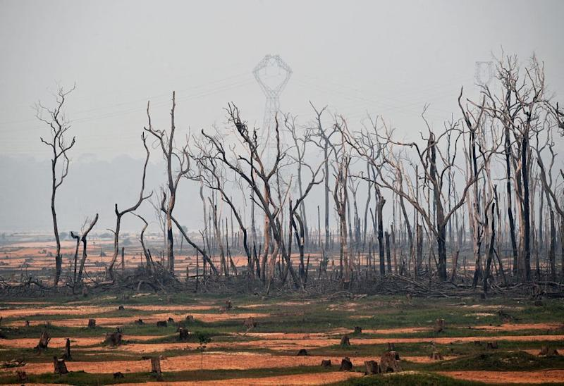 View of burnt areas of the Amazon rainforest, near Abuna, Rondonia state, Brazil, on August 24, 2019