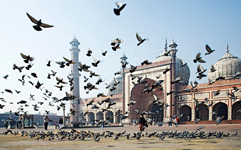 Delhi is all hustle and bustle, even the birds - This content is subject to copyright.