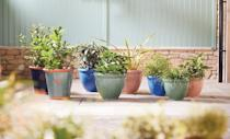 """<p>Go green in the garden by getting your hands on these stunning terracotta pots, which are available to purchase in blue, green, blush pink and navy. </p><p><a class=""""link rapid-noclick-resp"""" href=""""https://www.aldi.co.uk/c/specialbuys/garden-shop"""" rel=""""nofollow noopener"""" target=""""_blank"""" data-ylk=""""slk:SHOP NOW"""">SHOP NOW</a></p><p><strong>Like this article? <a href=""""https://hearst.emsecure.net/optiext/cr.aspx?ID=zsATrj4qAwL7PXfHOfbti0xjie5wOfecvOt8e1A3WvL5x0TsMrTgu8waUpN%2BcCNsV3wq_zCaFTleze"""" rel=""""nofollow noopener"""" target=""""_blank"""" data-ylk=""""slk:Sign up to our newsletter"""" class=""""link rapid-noclick-resp"""">Sign up to our newsletter</a> to get more articles like this delivered straight to your inbox.</strong></p><p><a class=""""link rapid-noclick-resp"""" href=""""https://hearst.emsecure.net/optiext/cr.aspx?ID=rEIqRuDcS16UGvb2CsG9coU7Y5ojOQn7P8im9ejs0NiFp18n8XFjb_nzImbDz5wFw3EeZozf_PGbri"""" rel=""""nofollow noopener"""" target=""""_blank"""" data-ylk=""""slk:SIGN UP"""">SIGN UP</a></p>"""