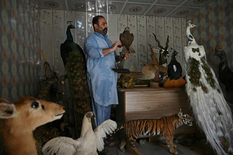 Surrounded by stuffed leopards, deers, parrots and cats, Jahangir Khan Jadoon sees his craft as both an art and a vital way to console those in pain