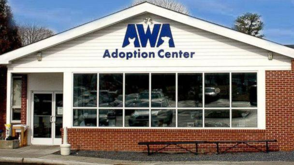 PHOTO: The Animal Welfare Association in Voorhees, New Jersey, have received over 350 offers from people across the country who want to adopt Burrito--some as far as Canada. (Animal Welfare Association )