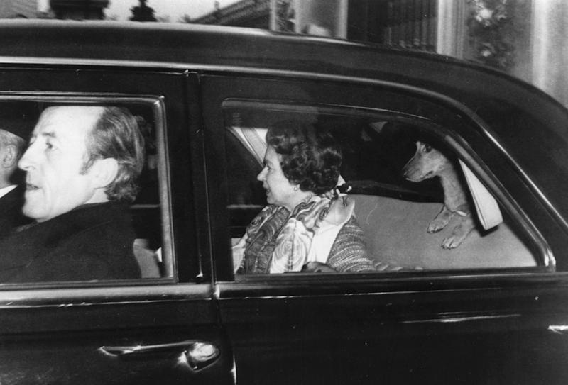 Queen Elizabeth II traveling in the back of a car with one of her corgis, circa 1980.