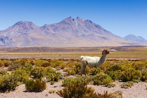 """<span class=""""caption"""">The Atacama is the driest place on earth outside of a few Antarctic valleys.</span> <span class=""""attribution""""><span class=""""source"""">Olga Danylenko / shutterstock</span></span>"""