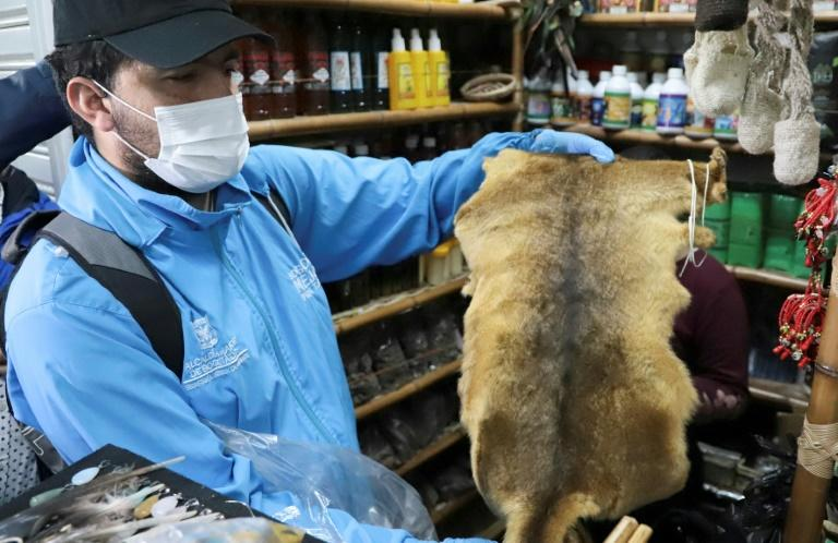 In a handout photo, an employee of Bogota's environment secretariat shows a skin seized during an operation targeting animal parts dealers on September 10, 2019