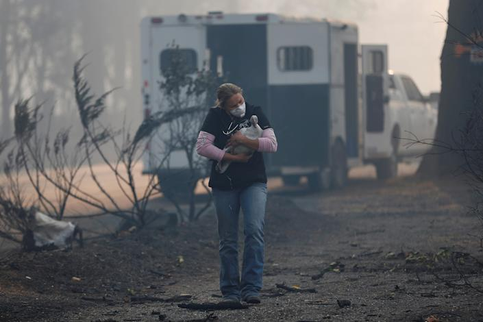 <p>Equine veterinarian Jesse Jellison carries an injured goose to a waiting transport during the Camp Fire in Paradise, Calif., Nov. 10, 2018. (Photo: Stephen Lam/Reuters) </p>