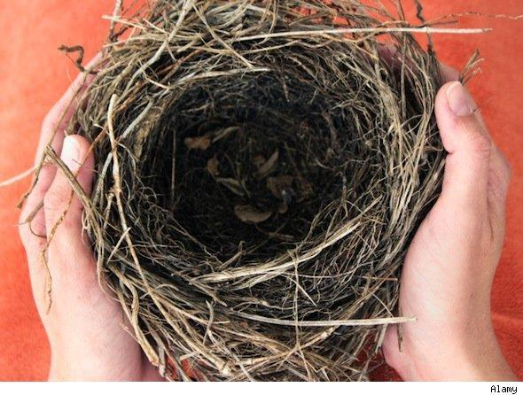 DIY empty nest projects