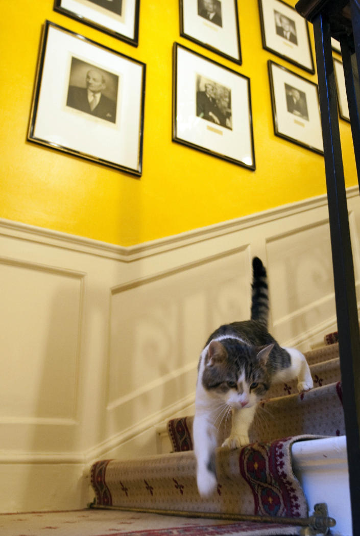 FILE - In this Tuesday Feb. 15, 2011 file photo, Larry the new cat for 10 Downing Street, walks down the stairs of the Prime Minister David Cameron's official residence in London. Monday, Feb. 15, 2021 marks the 10th anniversary of rescue cat Larry becoming Chief Mouser to the Cabinet Office in a bid to deal with a rat problem at 10 Downing Street. (Mark Large/Pool photo via AP, file)