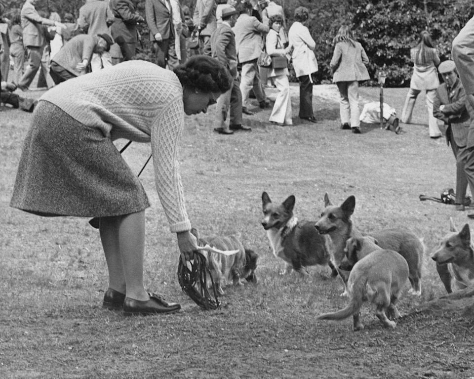 <p>Her first corgi, Susan, was a gift for her 18th birthday in 1944. Her last corgi, Whisper, died in 2018; she currently cares for two dorgis (corgi- dachshund mixes), Candy and Vulcan. </p>