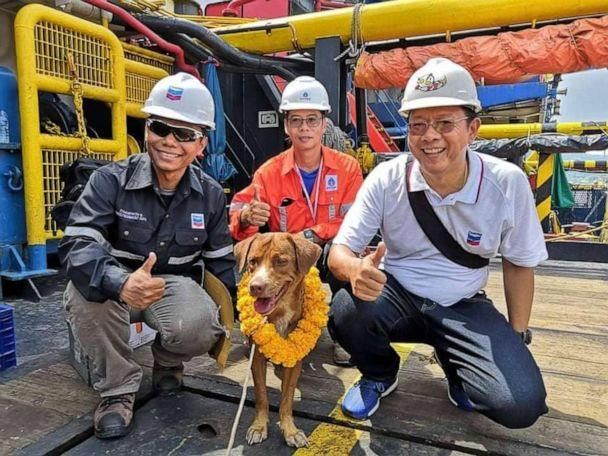 PHOTO: The oil rig workers named the dog Boonrod, which translates to 'the dog rescued by merit.' (Vitisak Payalaw)