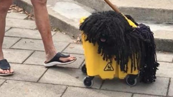 Your Halloween Costume Will Never Top This Dog Who Went As A Mop