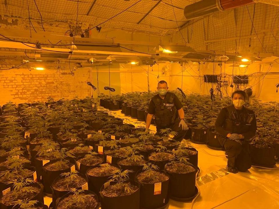 The cannabis farm was uncovered by officers inside a unit at the Royal Ordnance Depot in Weedon, Northants. (swns)