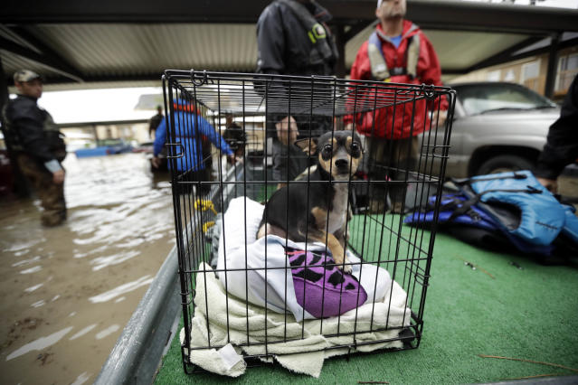 <p>A dog looks out from a crate as a family is evacuated by boat from their apartment, surrounded by floodwaters from Tropical Storm Harvey, Aug. 29, 2017, in Kingwood, Texas. (Photo: Gregory Bull/AP) </p>