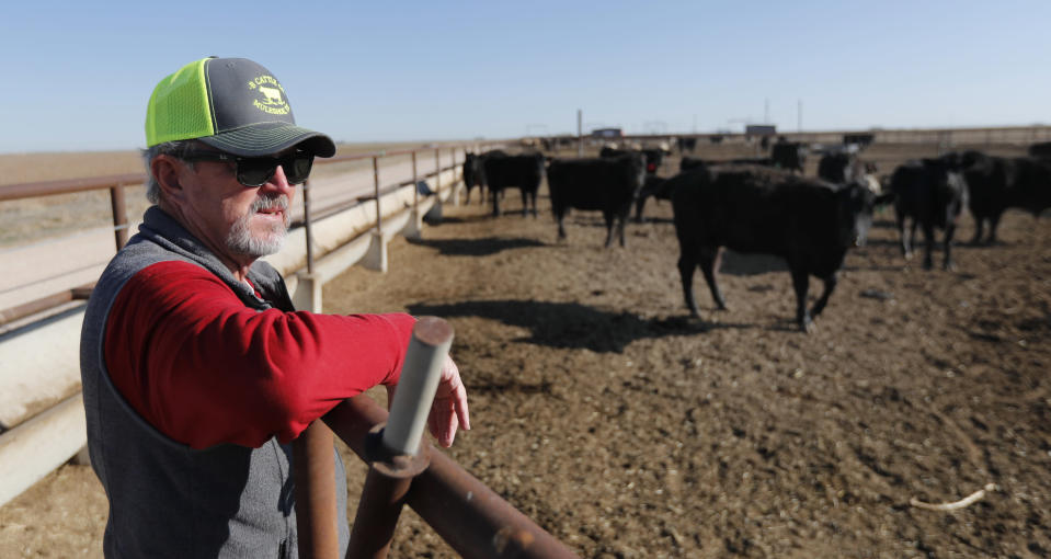 Tim Black looks over some of his Black Angus cattle in a feed pen on his Muleshoe, Texas, farm on Monday, April 19, 2021. The longtime corn farmer now raises cattle and plants some of his pasture in wheat and native grasses because the Ogallala Aquifer, needed to irrigate crops, is drying up. (AP Photo/Mark Rogers)