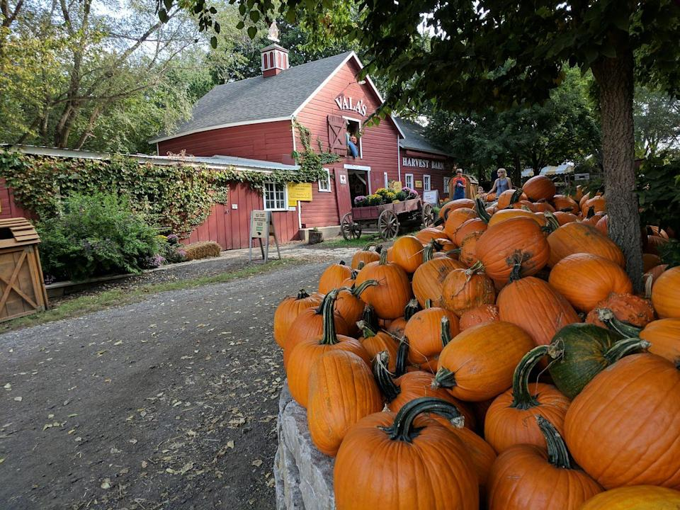 """<p><strong>Gretna, Nebraska (Sept 24–Oct 31)</strong></p><p>For more than three decades, the Vala family has hosted visitors at <a href=""""http://www.valaspumpkinpatch.com/"""" rel=""""nofollow noopener"""" target=""""_blank"""" data-ylk=""""slk:Vala's Pumpkin Patch and Apple Orchard"""" class=""""link rapid-noclick-resp""""><strong>Vala's Pumpkin Patch and Apple Orchard</strong></a>. At the Fall Festival, you can enjoy caramel apples, hayrack rides, and the Pigtucky Derby Pig Races! Prices start at a price of $15.95 (Mon-Thurs) or $29.95 (Fri-Sun) for guests over age 2 and $19.95 on Halloween! Save up to $3 per person when you order online.<br></p>"""