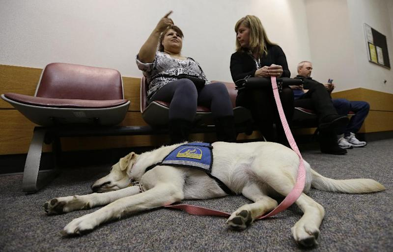 In this photo taken Monday, May 13, 2013, courthouse dog Kiley lies across the feet of Linda Avila, left, a witness in a homicide case, as Avila sits with Kiley's handler Michelle Walker, Justice Services manager, in a hallway at the Pierce County Courthouse in Tacoma, Wash. As canine companions in courthouses, dogs have helped thousands of victims and witnesses, but some challenges are working their way through the courts, driven by attorneys who claim the dogs are distractions or sympathy magnets. So far, all lower courts have upheld the use of dogs. (AP Photo/Elaine Thompson)