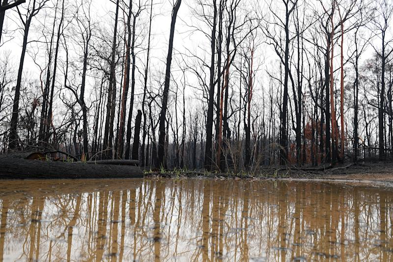 Fallen branches and other debris will be quickly transported in floodwater. Pictured are trees reflected in a pool of water.
