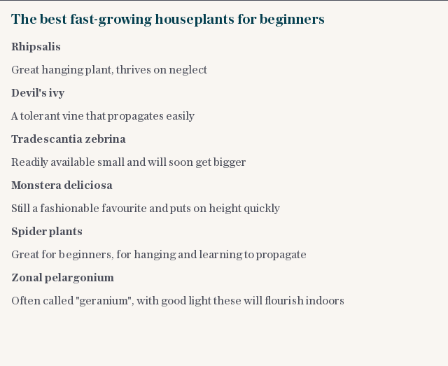 The best fast-growing houseplants for beginners