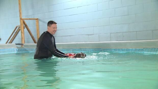 A 13-year-old chocolate lab named Babygirl comes to Dog Swim Vancouver once a week for a swimming session (CBC News - image credit)