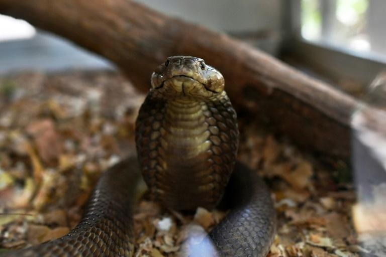 Every year, snakes bite about 5.4 million people worldwide but the figure is likely a vast underestimation, given underreporting and patchy recordkeeping, officials say