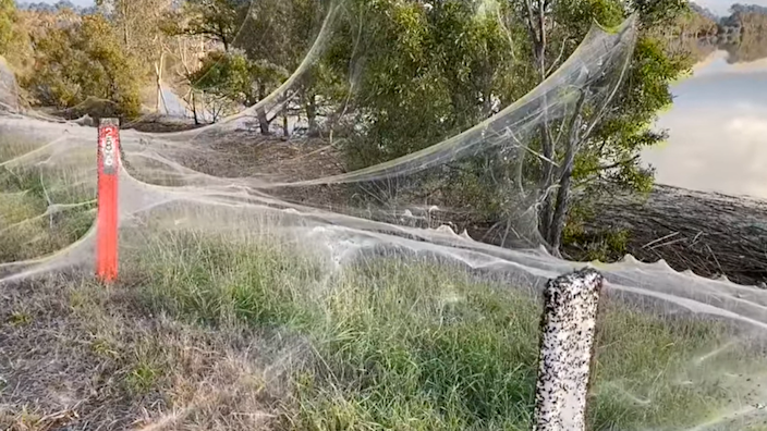 The webbing blanketing a causeway near a Victorian town affected by the rains