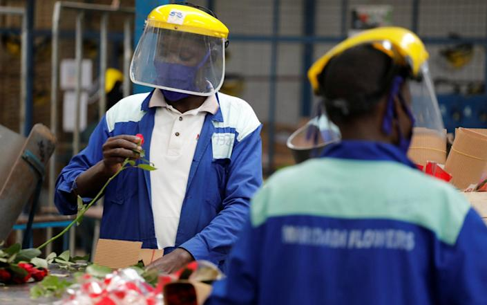 Workers sort roses on the packing line while wearing protective equipment at the Maridadi flower farm in Naivasha, Kenya