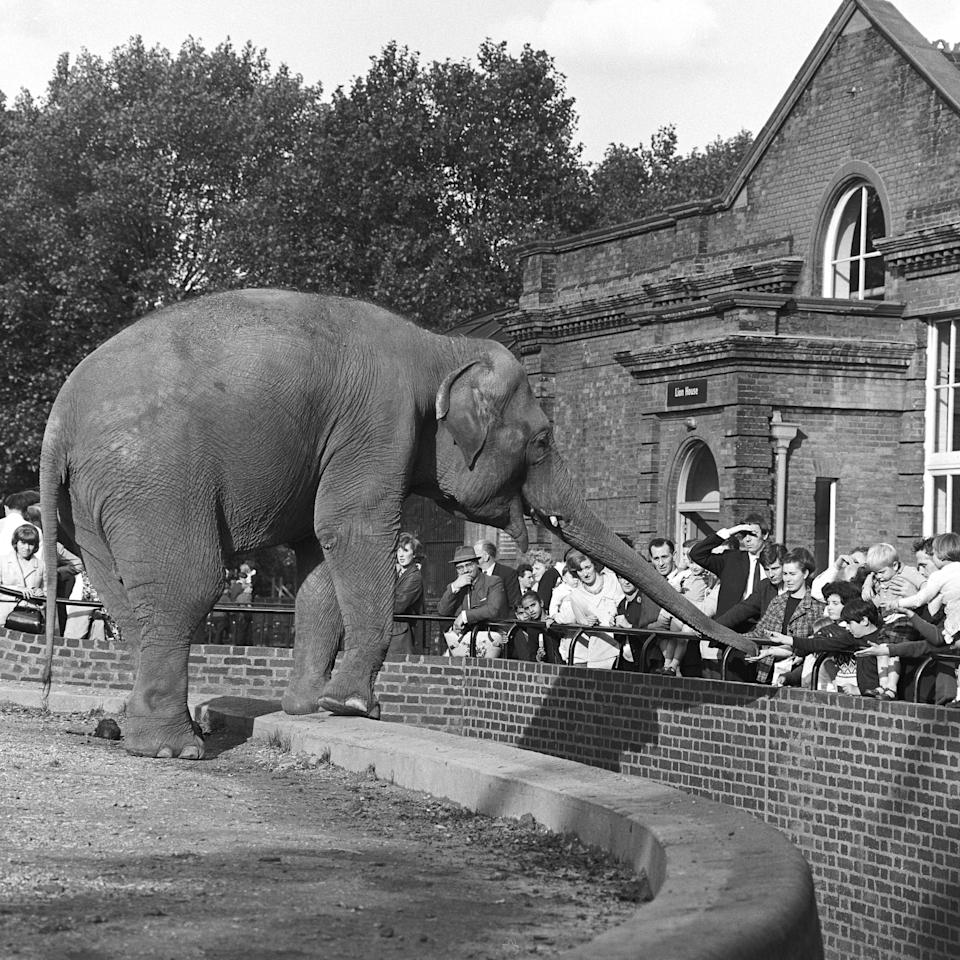 Elephant interacting with visitors at the London Zoo, London, UK, 1960. (Photo by Wilfred Frederick/Getty Images) - Getty
