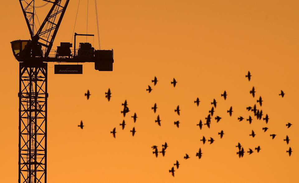 A flock of birds fly in front of a construction crane at dusk in London, Britain, January 5, 2017. REUTERS/Toby Melville     TPX IMAGES OF THE DAY