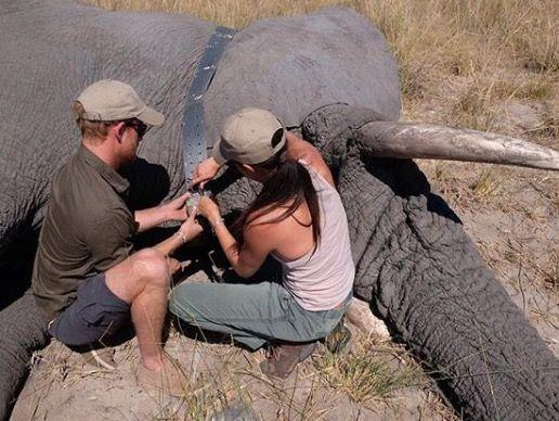 """<p>In 2017, Meghan Markle and Prince Harry took a trip to Botswana - the same place the pair travelled together shortly after they first met. Prince Harry organised the surprise trip to the African country for Meghan's 36th birthday, and while they were there the couple did some important conservation work with elephants. This is a photograph that was later released by the Duke and Duchess of Sussex <a href=""""https://www.instagram.com/p/Bv2HM4mBGT8/"""" target=""""_blank"""">on their Instagram account</a> to celebrate the release of the important environmental documentary series, Our Planet.</p>"""