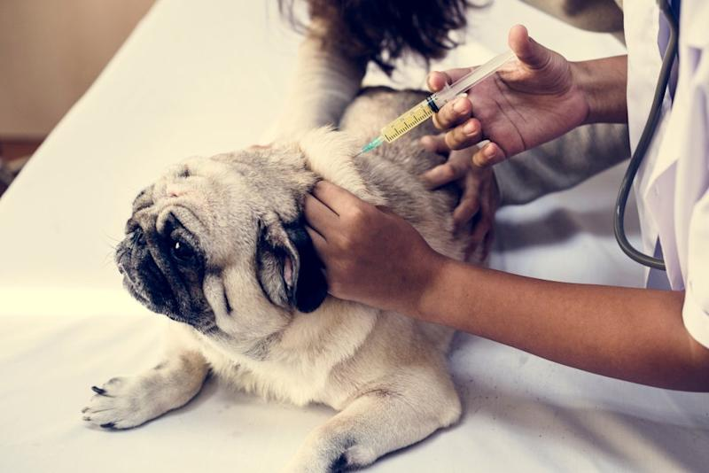The Dog Vaccinations Your Puppy Really Needs