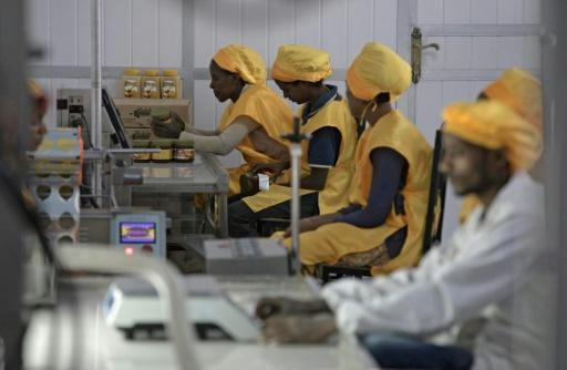 Ethiopian honey farmers struggle with sticky traditions