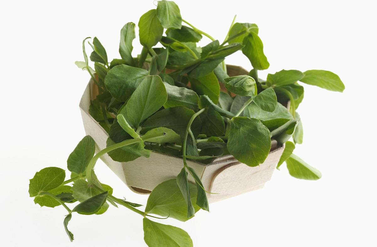 <p>Uh oh. These little things look uber healthy, but pea shoots and sprouts have been the source of an incredible number of food recalls because they are REALLY good at carrying foodborne illnesses. Be warned. [Rex Features]</p>