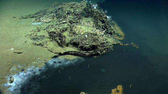 Watch Live: Scientists Explore a Mysterious Deep-Sea World