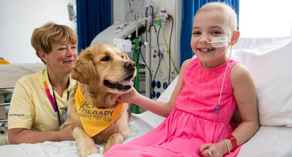One of the therapy dogs visits a young patient and puts a smile on her face.