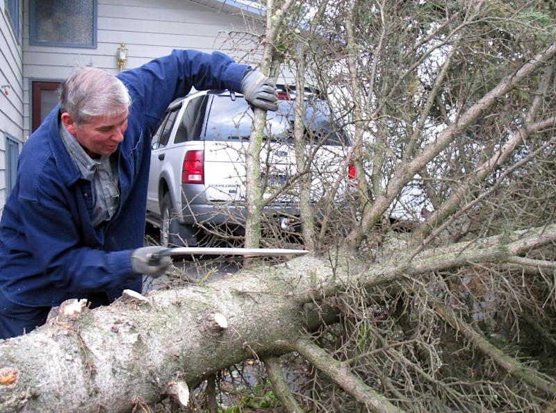 Jack King is shown cutting up a tree that fell into his driveway in east Anchorage, Alaska, Wednesday, Sept. 5, 2012. A massive windstorm uprooted trees, knocked out power and closed schools in Anchorage. (AP Photo/Mark Thiessen)