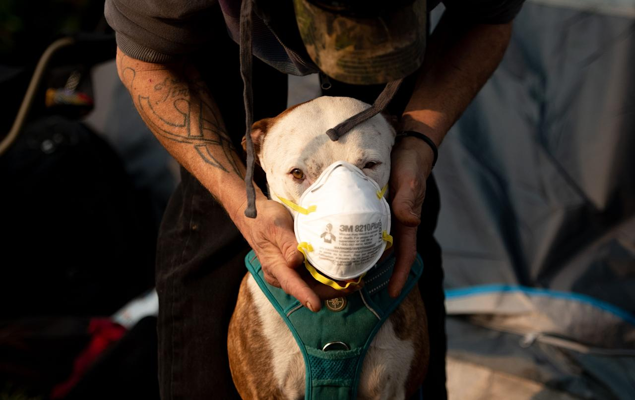 <p>Jason House attempts to put a respirator mask on his dog Rowland at an evacuee encampment in a Walmart parking lot in Chico, Calif., on Nov. 17, 2018. (Photo: Josh Edelson/AFP/Getty Images) </p>