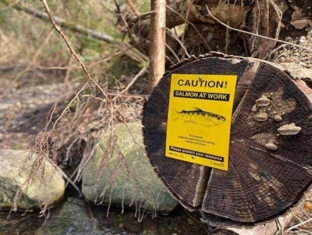The City of Coquitlam's sensitive salmon habitat has come under threat recently from vandals and extra traffic. (City of Coquitlam  - image credit)