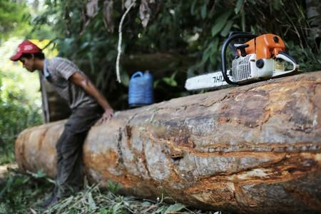FILE PHOTO: A man sits on a tree next to his chainsaw in Jamanxim National Park near the city of Novo Progresso