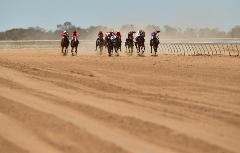 While the slaughter of racehorses is not illegal in Australia, an undercover ABC probe found the practice is more widespread than acknowledged (AFP Photo/PETER PARKS)