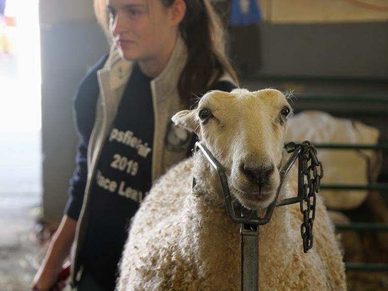 """""""If you as an individual feel uncomfortable attending this year's fair, then we ask that you stay home,"""" Topsfield Fair organizers said."""