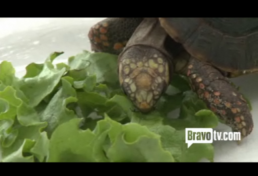 Andy Cohen Watch What Happens Live turtle mascot eating